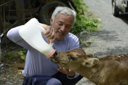 Naoto Matsumura è l'eroe del Giappone: è restato a Fukushima per salvare gli animali (foto)