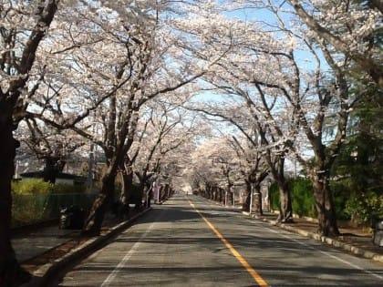 fukushima-animali-abbandonati-naoto-matsumura (4)