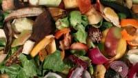Raccolta differenziata: come riciclare correttamente i rifiuti organici