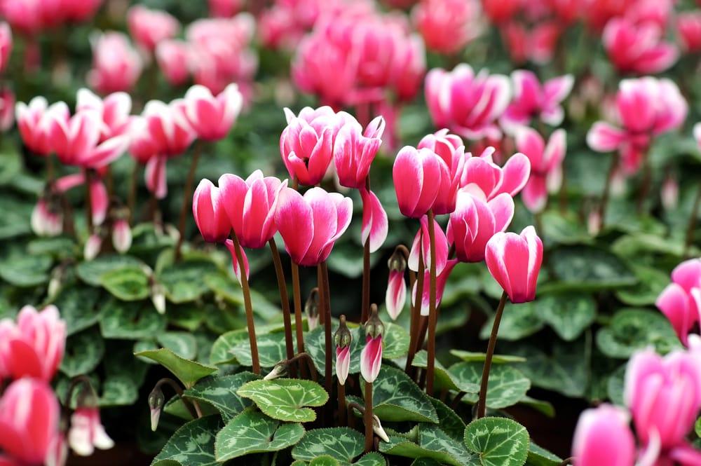 Fiori autunnali non sprecare for Immagini fiori autunnali