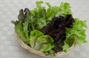 benefici lattuga salute