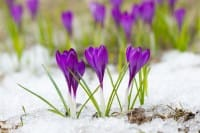 Come proteggere le piante dal freddo: dal telo trasparente alla pacciamatura