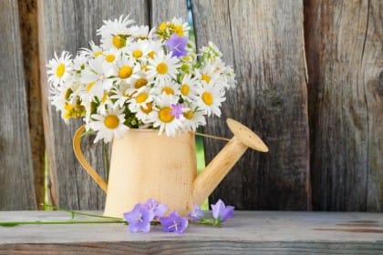 Irrigare l'orto: i consigli fondamentali per innaffiare le piante senza sprechi di acqua