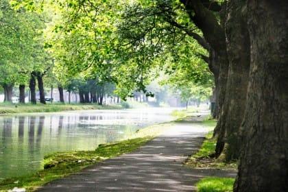 Una passeggiata tra gli alberi, la migliore terapia contro stress, ansia e depressione