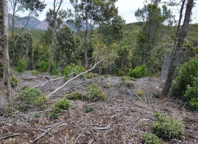 Foresta Sulcis in Sardegna: vogliono distruggerla per fare legna da ardere