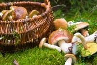 Come riconoscere i funghi velenosi: la guida per evitare eventuali intossicazioni alimentari