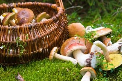 come riconoscere i funghi velenosi