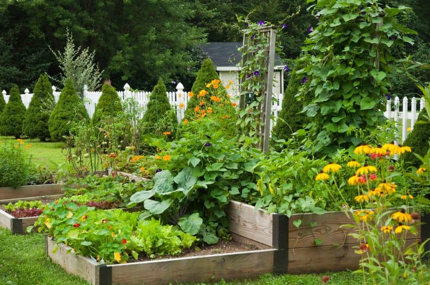 Raised Vegetable Garden Layout