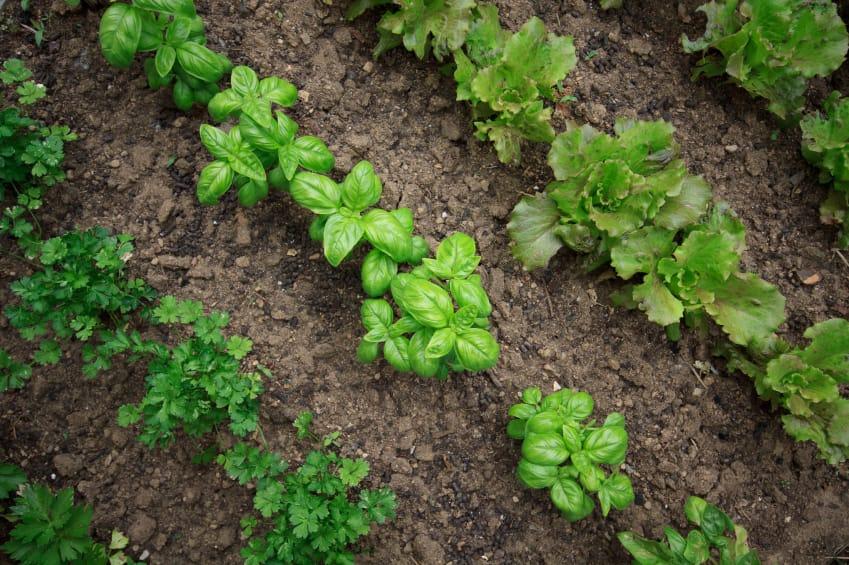 cosa coltivare a febbraio - non sprecare - Piccolo Giardino Sul Balcone