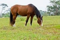 Cavalli e asini abbandonati: ecco dove si curano e si salvano