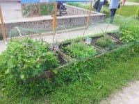 L'orto a scuola: il progetto del Comune di Padova per educare i giovani alla sostenibilità