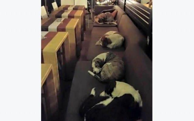 In Grecia il bar che, ogni notte, accoglie i cani randagi per proteggerli dal freddo