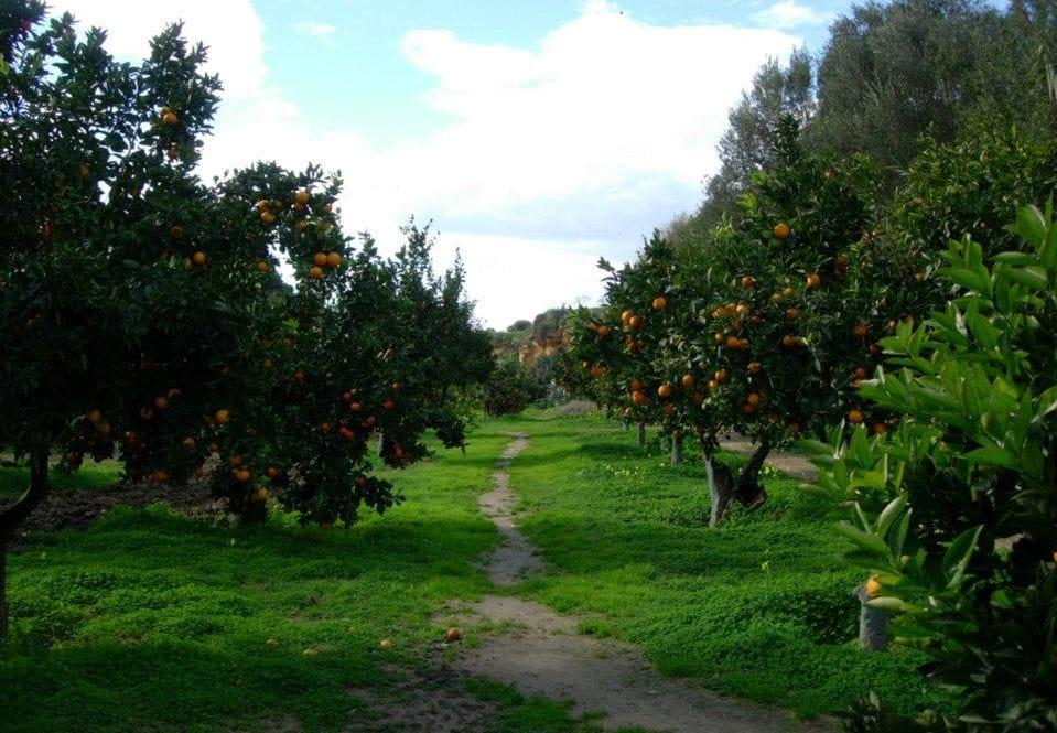 Le immagini sono tratte dalla pagina facebook ucfai u - Giardini curati ...
