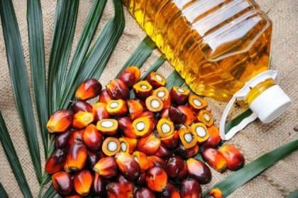 Olio di palma, l'alternativa è il lievito oleoso che non fa danni