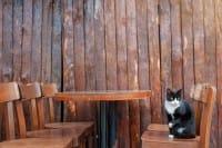 Cat Cafè, fioriscono i bar in Italia dove fare colazione in compagnia dei gatti (Foto)