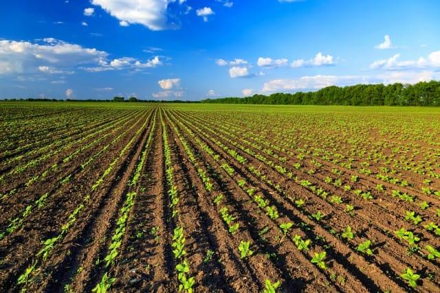 Agricoltura biologica, finalmente siamo primi in Europa. E diamo lavoro a 250mila persone