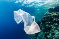 Batterio mangia-plastica, forse sarà la salvezza dei nostri mari
