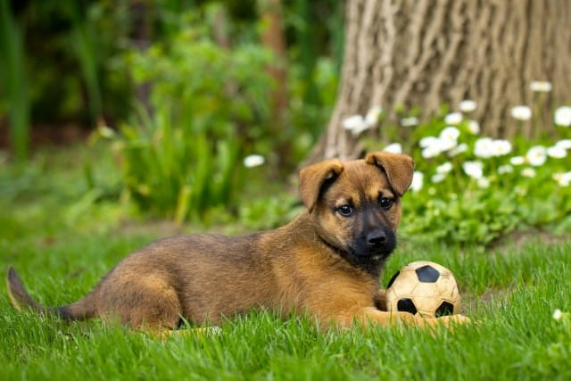 Giocare con il cane? Fatelo tutti i giorni. E seguite questi consigli su spazi e oggetti (foto)