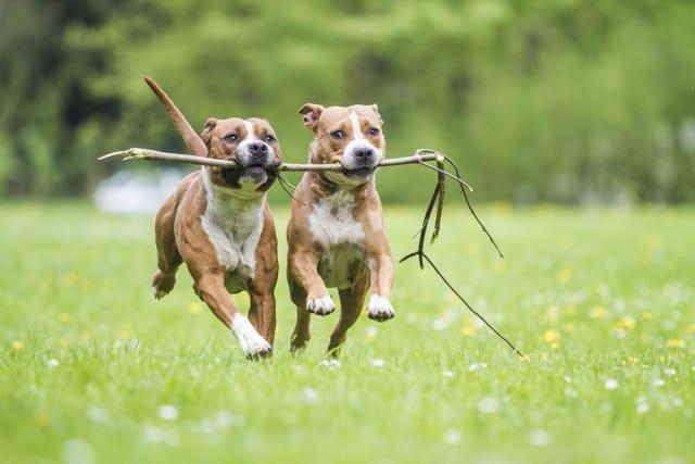 come-giocare-con-il-cane (5)