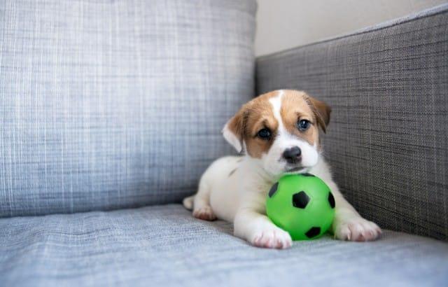 Come tenere la casa pulita con un cane non sprecare for Cani da tenere in casa