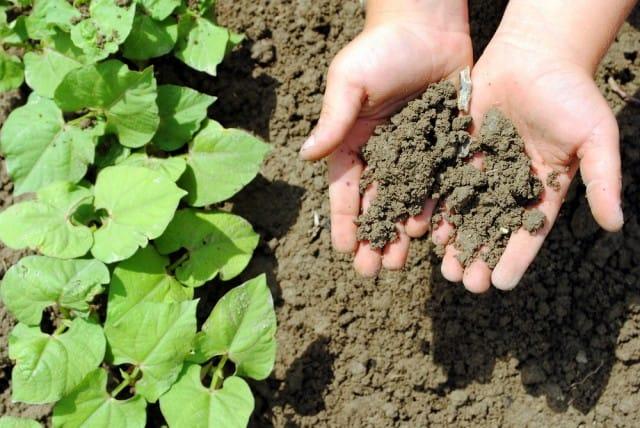 """Da scarti della frutta a fertilizzante per l'orto: il progetto dell'Istituto """"Livia Bottardi"""" di Roma"""