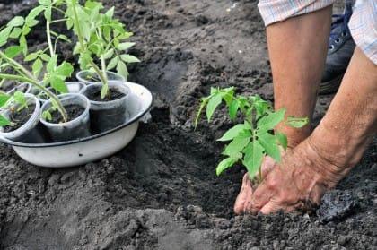 Cosa coltivare a marzo e i lavori da fare nell'orto. Primo: eliminare le erbe infestanti
