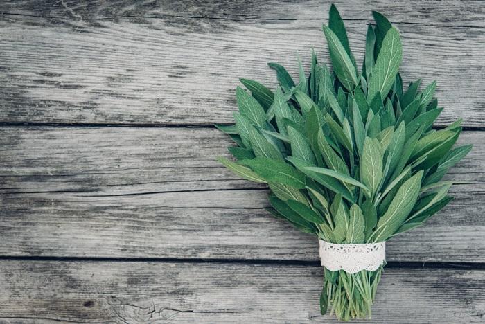 come coltivare la salvia