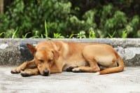 La storia di Michael e delle sue giornate trascorse a nutrire e curare i cani abbandonati