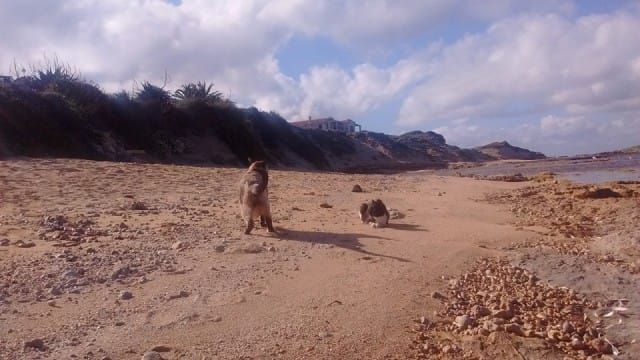 oasi-felina-su-pallosu-gatti-abbandonati (1)