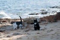 Sardegna, un'intera spiaggia solo per i gatti abbandonati dai padroni