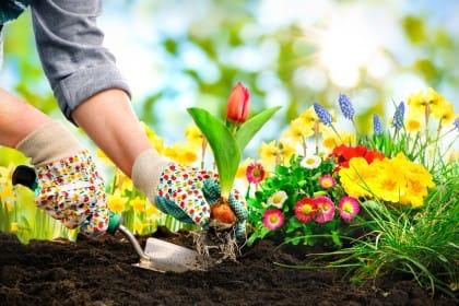 Benefici del giardinaggio: coltivare il verde aiuta anche a tirare sù il morale