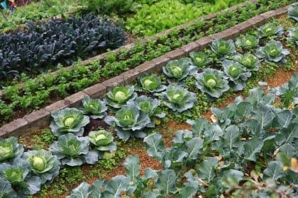 Corsi per imparare a coltivare l'orto: le scuole e le associazioni che li organizzano