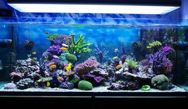 Pet therapy con i pesci, aumenta la concentrazione e rilassa. Ecco tutti i benefici