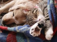 Come far convivere insieme cane e gatto nella stessa casa: regole e consigli utili