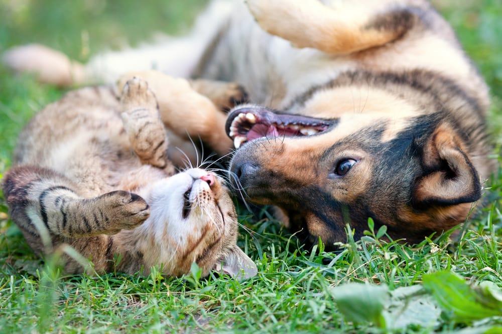 Risultati immagini per foto cane e gatto