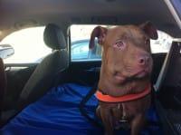 Effetto Palla Onlus, l'associazione della Clinica Due Mari di Oristano per aiutare gli animali abbandonati