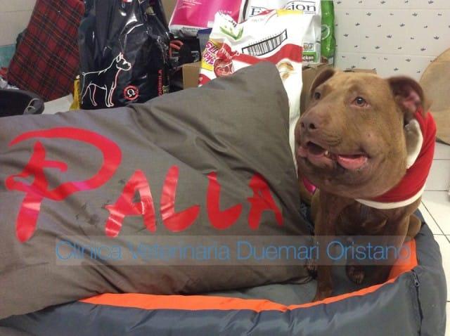 effetto-palla-onlus-associazione-clinica-veterinaria-due-mari-oristano (4)