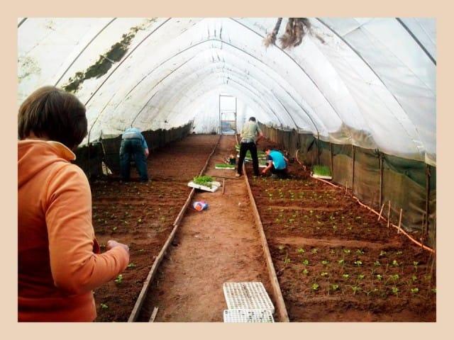 Agricoltura bambini 3