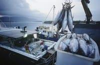 In Italia il 75 per cento del pesce viene importato, uno spreco per il Paese e per la salute