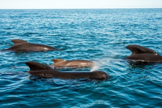 come-salvare-le-balene (1)
