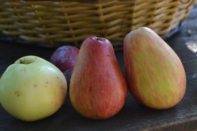 Coltivare frutti antichi 1