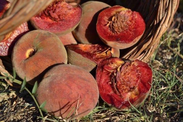 Coltivare frutti antichi 2