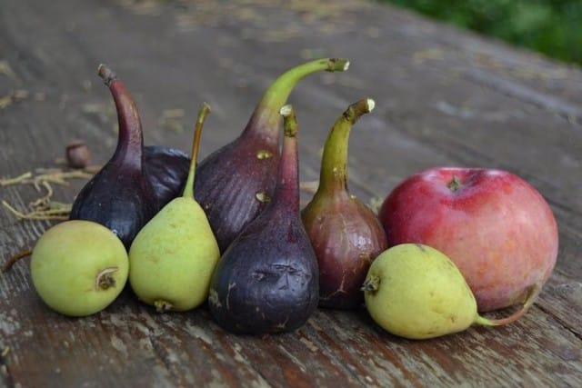 Coltivare frutti antichi 3