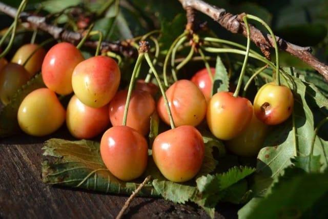 Coltivare frutti antichi 4