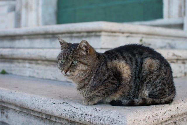 QUALI ANIMALI SI INCONTRANO A ROMA