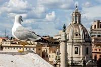 Gabbiani, gatti ma anche rettili e topi, ecco gli animali che popolano Roma (foto)