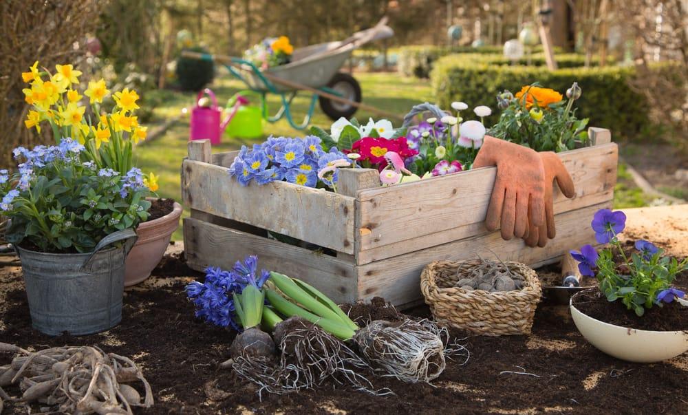 Orto autunno cosa piantare non sprecare - Fiori da giardino autunnali ...