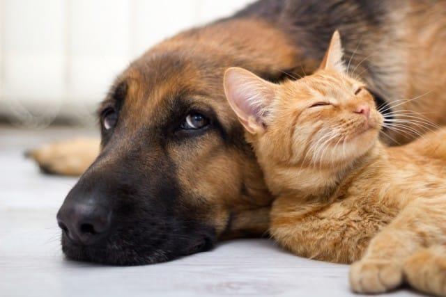come proteggere animali caldo