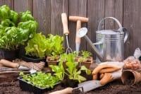 Insetticidi naturali, come prepararli facilmente con gli ingredienti che abbiamo in casa