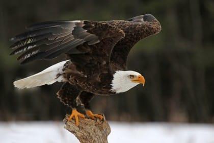 centro recupero avifauna castel tirolo